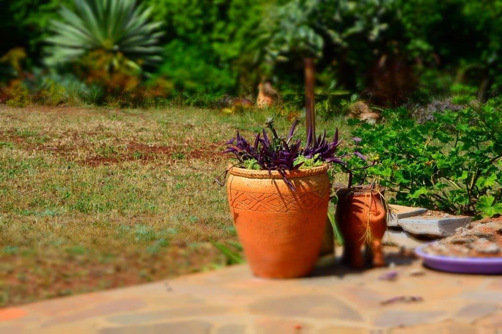 土って捨てられるの?枯れてしまった観葉植物の土は何ゴミ?